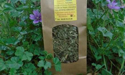 Plantala'Foie, la tisane essentielle pour remonter ses défenses immunitaires et nettoyer son foie en profondeur.