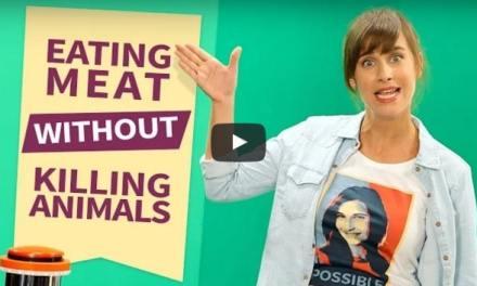 Manger de la viande sans tuer d'animaux, c'est possible: SuperMeat, une startup qui veut démocratiser la viande artificielle