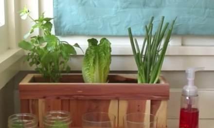 Comment faire pousser des légumes à partir de restes alimentaires