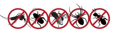 Comment repousser les insectes de chez soi sainement sans utiliser de produits chimiques