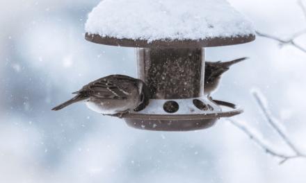 Face à un oiseau gelé, les pattes collées à une barre de fer à cause du froid, cet homme a eu la bonne réaction ! BRAVO