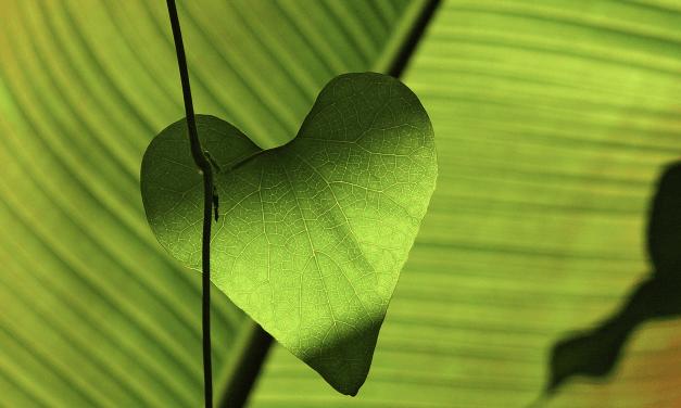 Des amours vécues à l'amour de soi – Cette énergie qui nous fait vivre – Lucien ESSIQUE