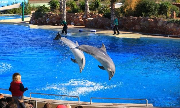 La reproduction des dauphins et orques en captivité désormais interdite en France.