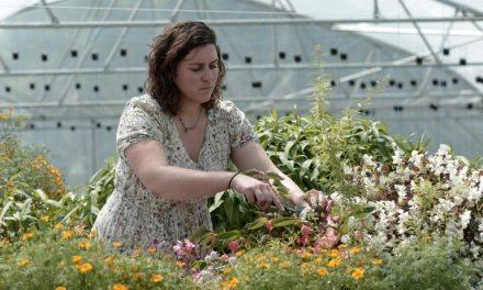En hydroponie et aquaponie, le «jardin extraordinaire» de Lucille alimente les grands chefs