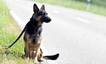 Partagez cette vidéo et 1 euro sera reversé à la société protectrice des animaux (SPA) Merci!