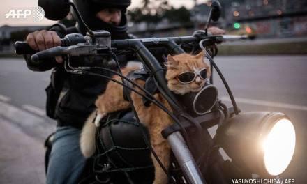Chiquinho, le chat voyageur