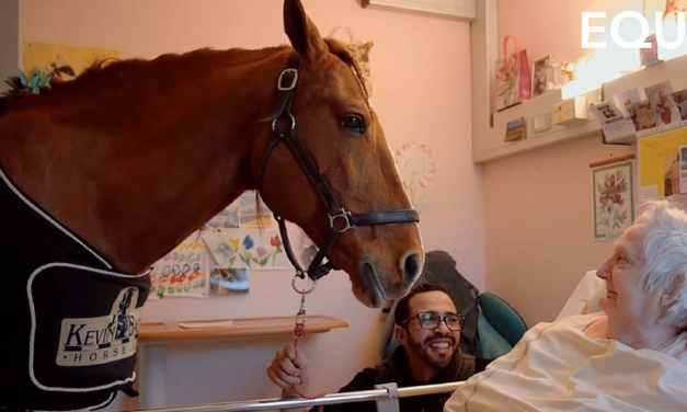 Deux jours par mois, Peyo, un étalon de 500 kilos, rend visite aux pensionnaires d'une maison de retraite et la magie opère.