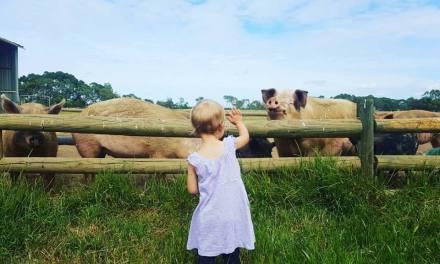 Sanctuaire agricole géré par des petites filles.
