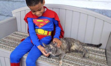 Ce petit garçon se déguise en super-héros pour aider et nourrir les chats de gouttière