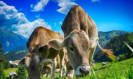 La vérité ne sort pas de la bouche de «ceux qui font le lait»