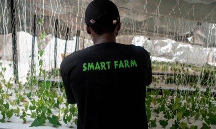 Jeunes, dynamiques, riches et ambitieux, les nouveaux « gentlemen farmers » du Nigeria
