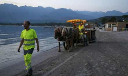 À Calvi, une hippomobile ramasse les poubelles des restaurants de plage