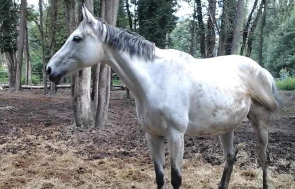 Rhône: Un club d'équitation fait faillite, des cavaliers se mobilisent pour sauver les chevaux de l'abattoir