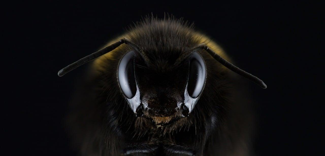 Des abeilles sauvent la vie de l'une d'elles. Incroyable sauvetage