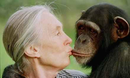 Environnement: Jane Goodall et Edgar Morin appellent au « sursaut »