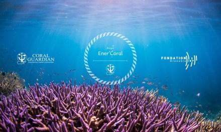 Adoptez un corail pour contribuer à la préservation de l'environnement et des populations locales !