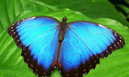 De chenille à papillon… Voici les étapes d'une métamorphose magnifique