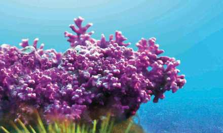 Le lithothamne, l'algue anti-acidité pour se soigner naturellement contre la fatigue et les excès alimentaires.