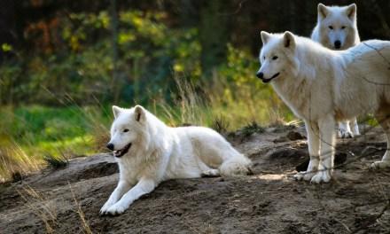Une association achète un terrain de 500 hectares pour protéger les animaux de la chasse.