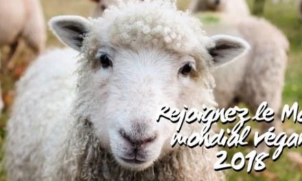 PETA vous propose gratuitement un programme d'un mois pour tester l'alimentation végane.