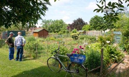 France – Albi – Cette ville tente d'atteindre l'autosuffisance alimentaire