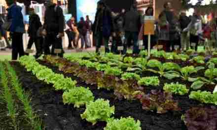 Agriculture urbaine: à Paris, alliance inédite entre quatre grands chefs et une coopérative