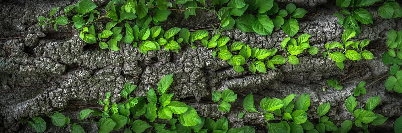 Chérir les arbres pour rendre les villes plus écologiques et plus saines