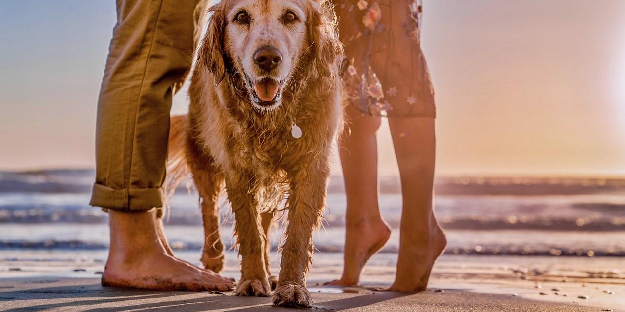 La vente des animaux de compagnie issus de l'élevage interdite dans les animaleries en Californie