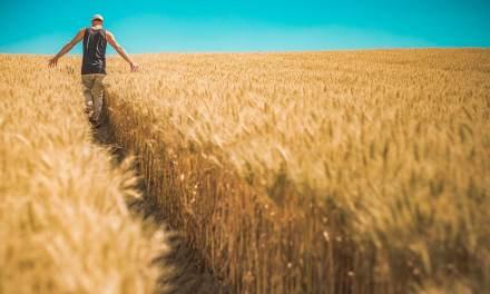 Soutenir les agriculteurs : les alternatives à la grande distribution