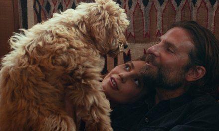 Bradley Cooper est récompensé par la PETA grâce à son chien Charlie