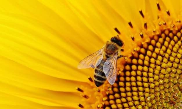 L'Allemagne prépare une loi pour protéger les insectes