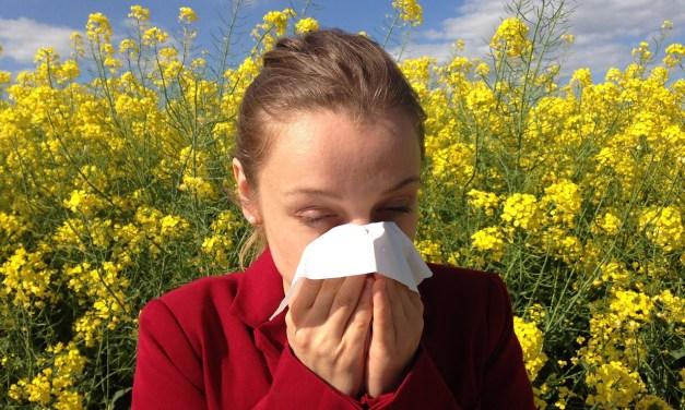 D'où viennent les allergies ?