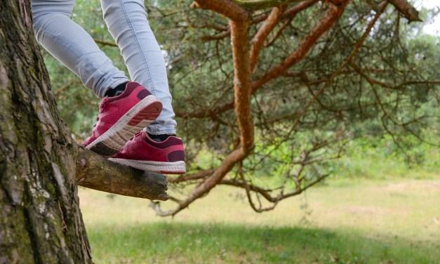 On n'est jamais trop jeune pour apprendre à connaître les arbres!