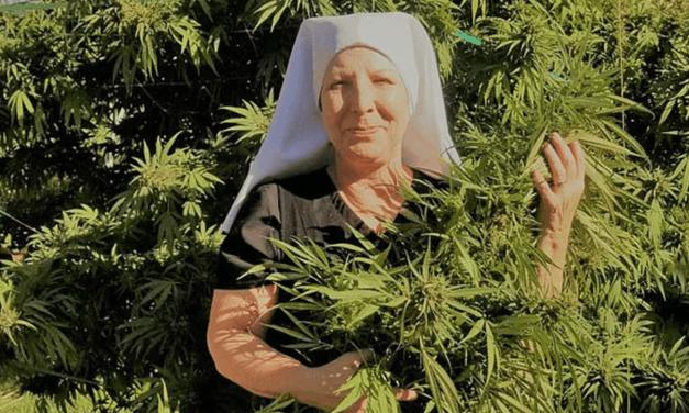 Une communauté de nonnes cultive le cannabis et ça rapporte gros!