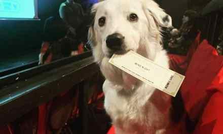 Texas – Ce cinéma vous permet de venir voir un film avec votre… chien, en dégustant du vin à volonté