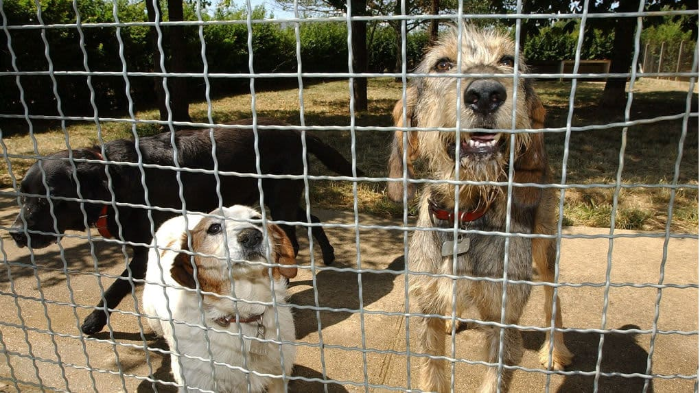 Décédée sans héritier, une Charentaise a décidé de léguer 187.000 euros à un refuge pour animaux