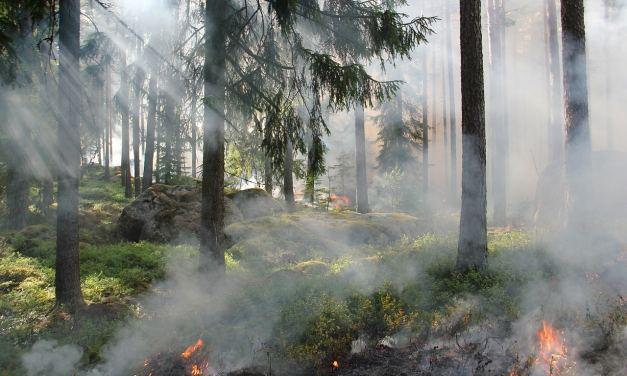 Des plantes pour éteindre des incendies !