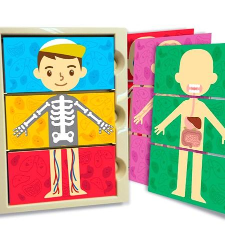 My Body Systems – El Cuerpo Humano