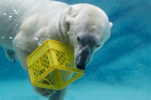 Happy Wednesday to you! Yes there is a reason for using a picture of a polar bear with a milk crate.