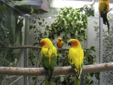 Expobourse de perroquets et oiseaux exotiques 2017  Waldighoffen  Foire et salon  Salle