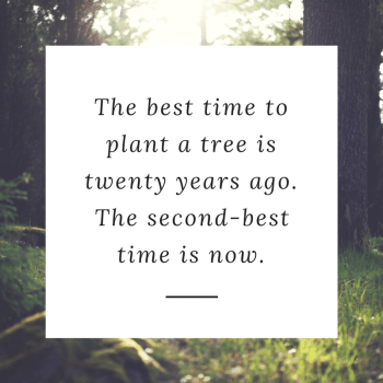 The best time to plant a tree is twenty years ago. The second-best time is now.