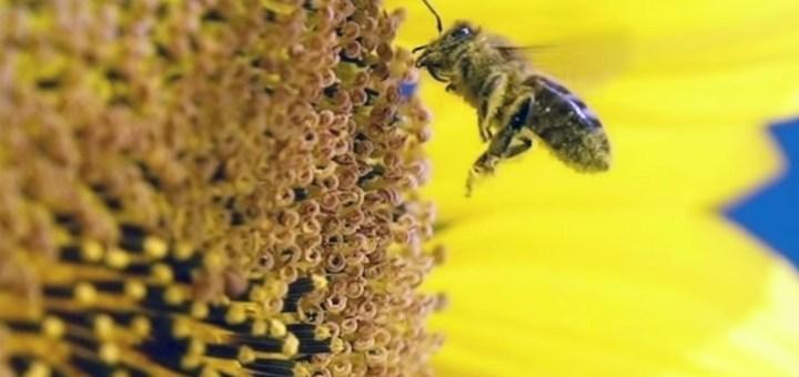 insecticidemonamour
