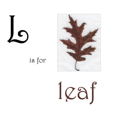 L is for Leaf