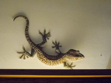 This little guy liked to strike a pose above the light fixture in the dining room. The staff told us he lived behind the painting at the end of the hall.