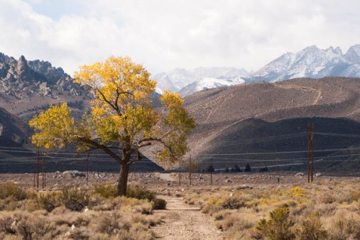 We took a ride out toward North Lake from Bishop, and had to stop on the way to get a shot of this tree.
