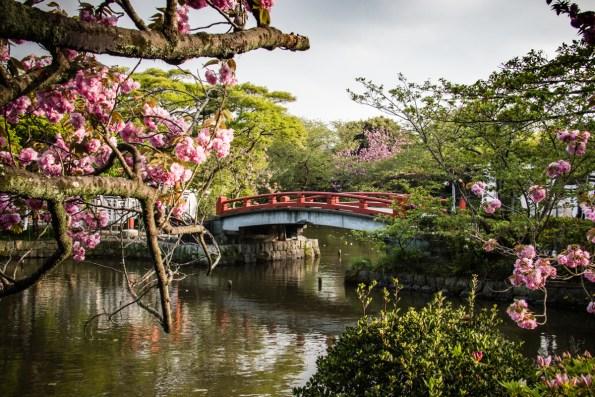 Kamakura: Tsurugaoka Hachimangu