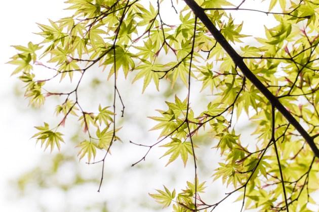 Maruyama Park, Gion, Kyoto.