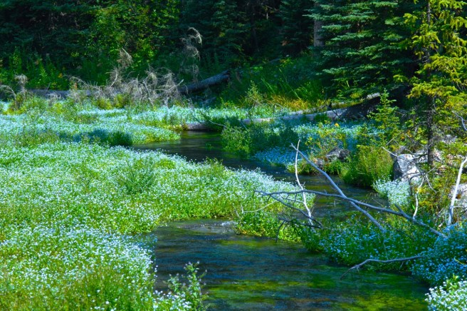 An amazingly beautiful and pristine stream in the Black HIlls of South Dakota.