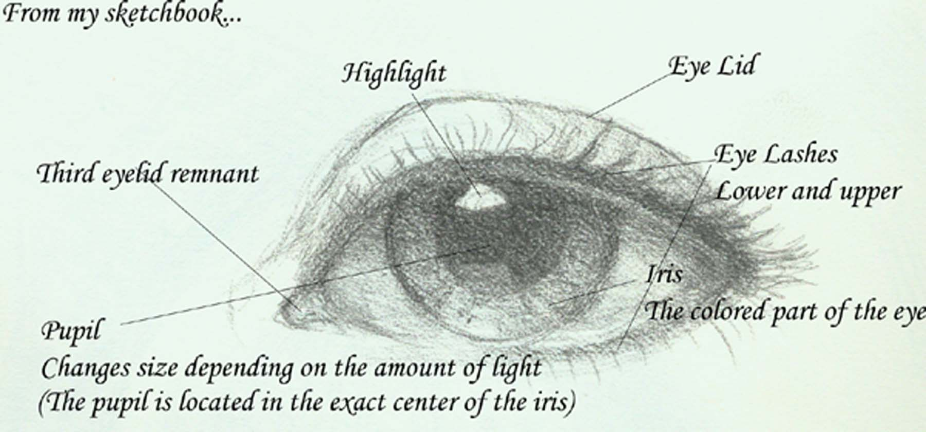hight resolution of eye diagram