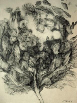 Semence (crayon sur papier Ingres 29,7 x 21 cm)